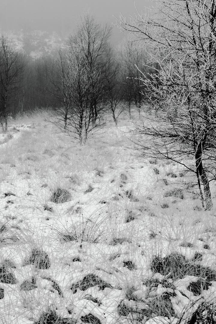 Wintereinöde 1