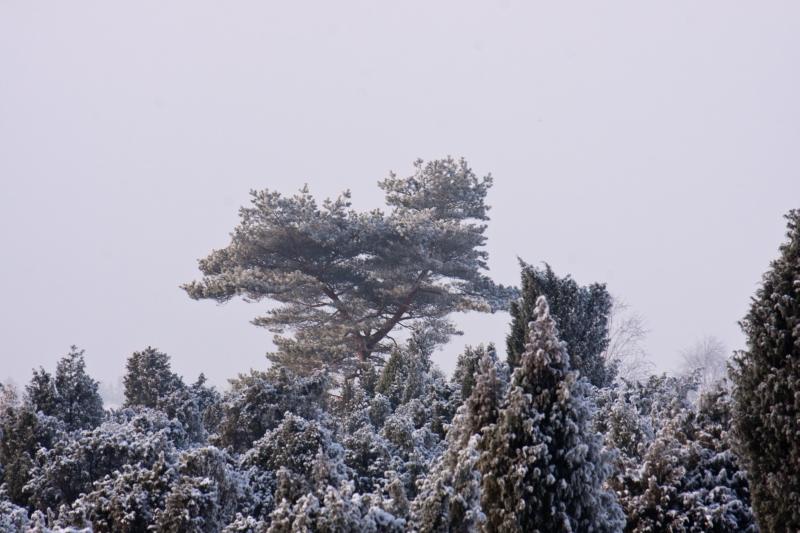 Wintereinzug im Wachholderwald