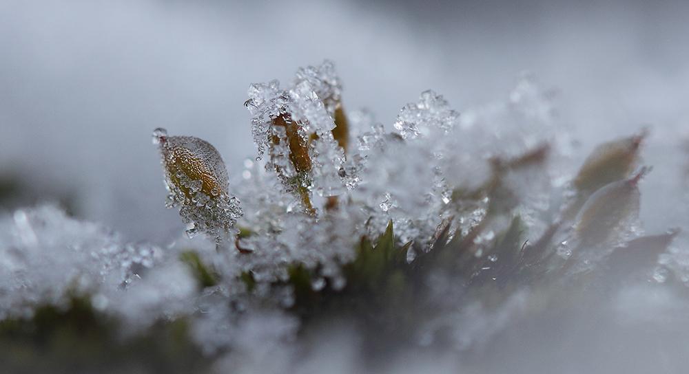 Wintereis...