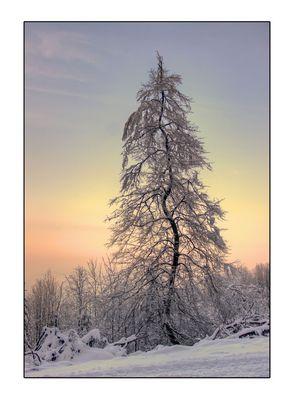 * Winterfarben *