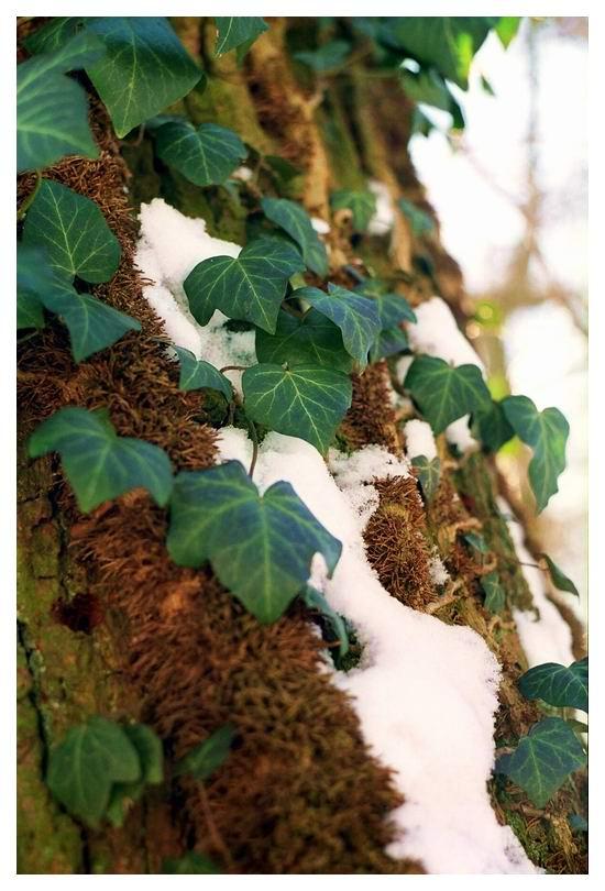 winterfarben I