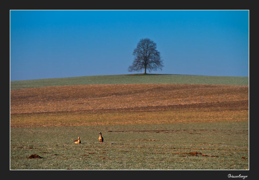 Winterfelder 8