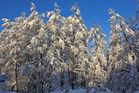 Winterfreuden 10