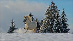 ~ Winterfreuden ~