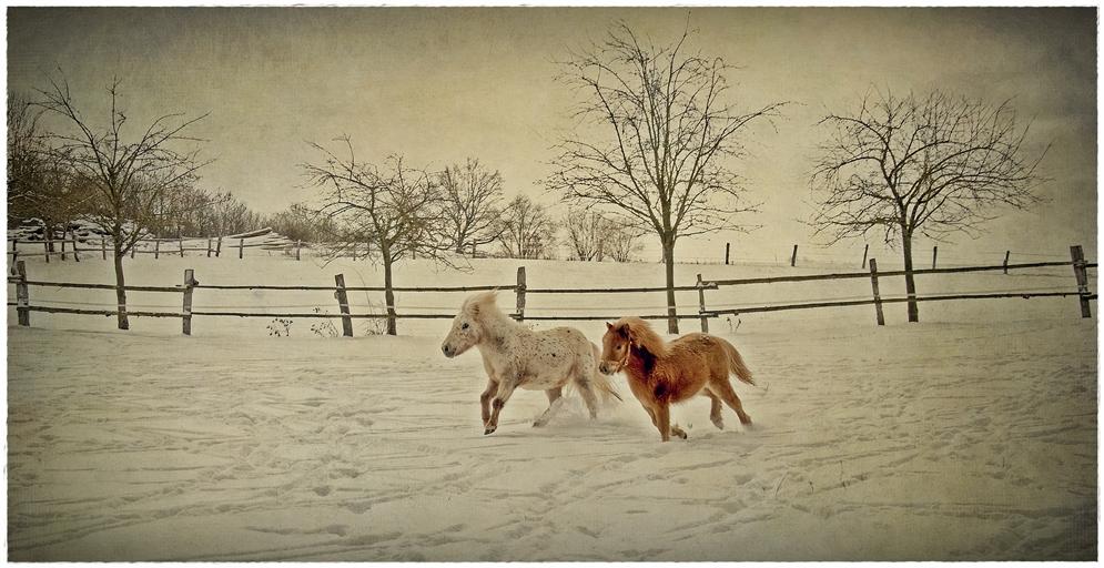 Winterfreuden...