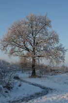 Winterfreuden am Nachmittag