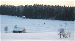 Winterfreuden in der Abendsonne...