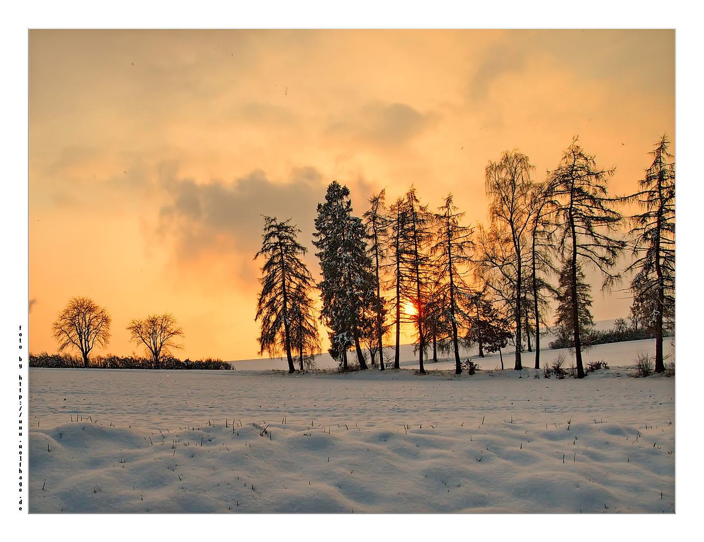 Winterfrühling :-)