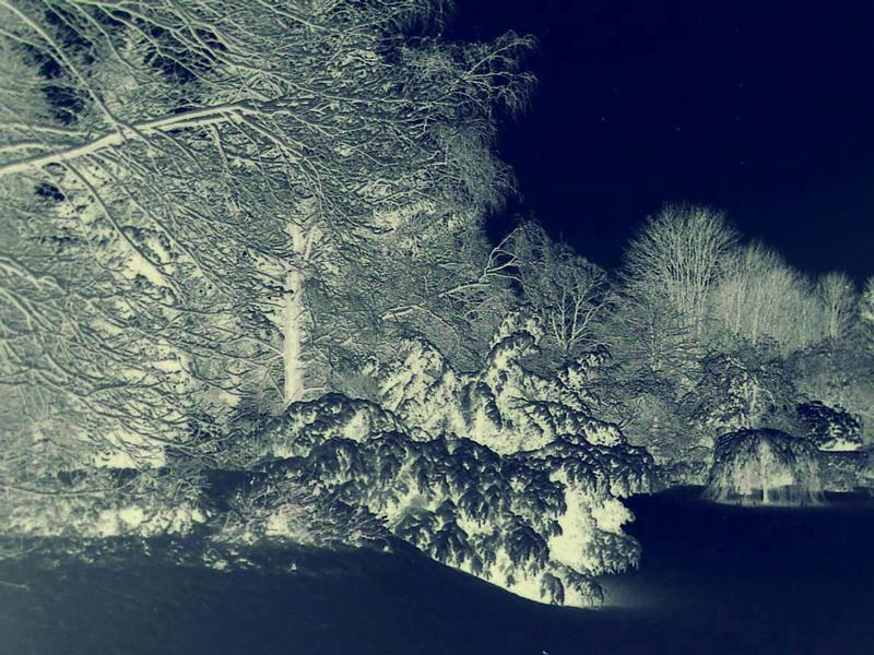 Wintergarten II