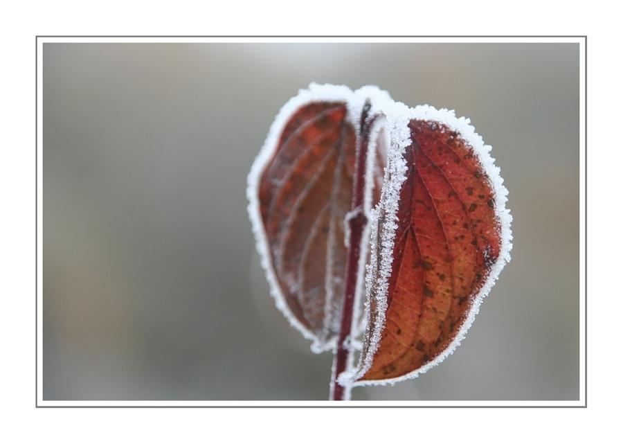 Wintergedanken IX