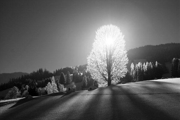 Wintergegenlicht