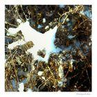 wintergeschichten (1)