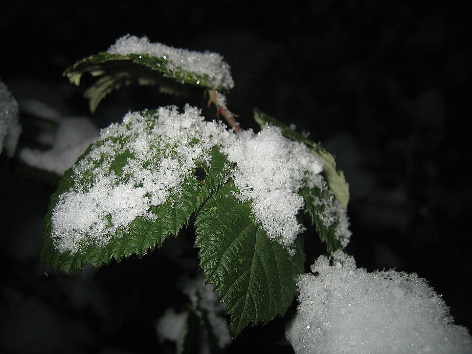 Winterglanz