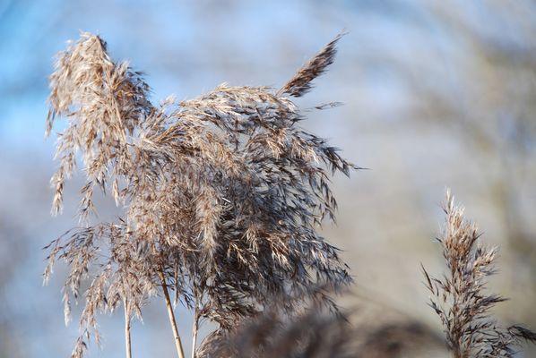 Wintergräser 2