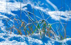 Wintergräser