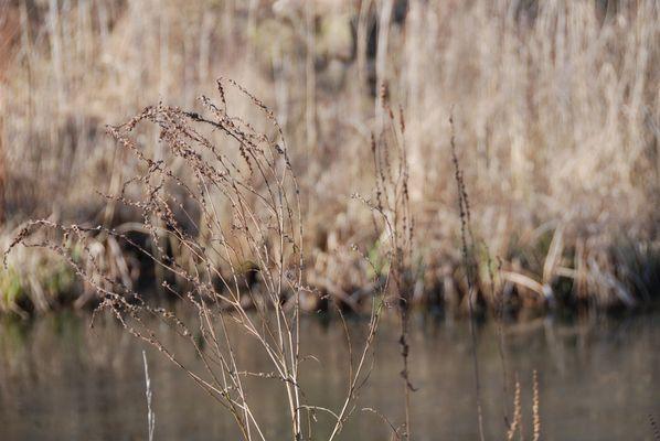 Wintergräser I