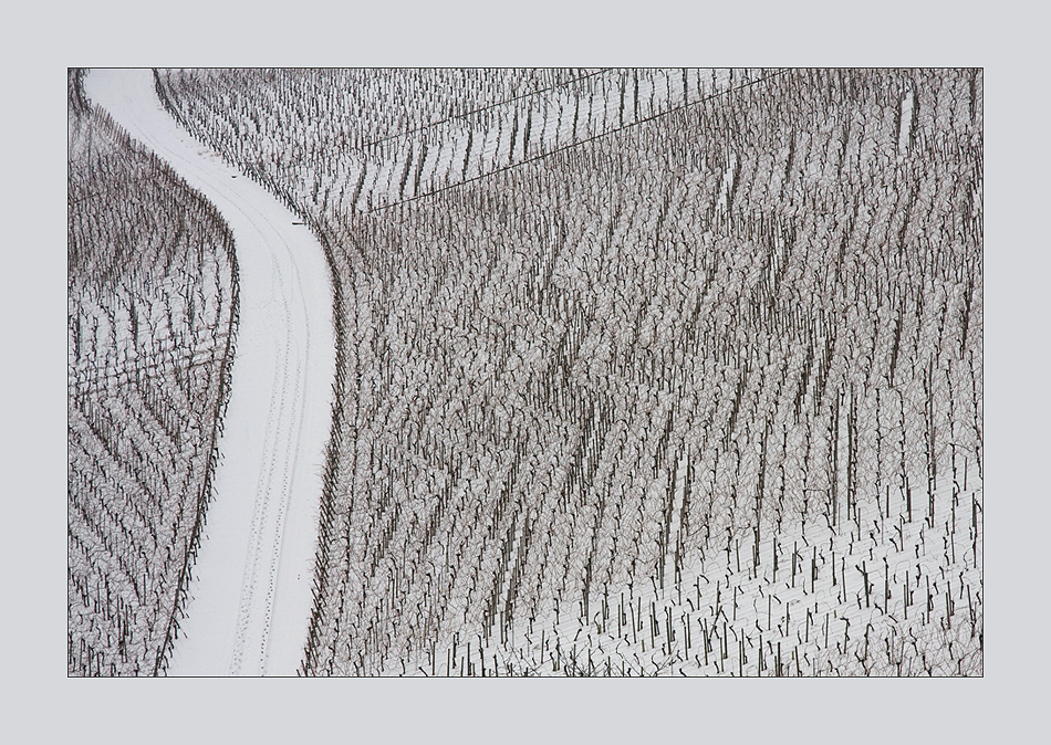 Wintergrafik im Weinberg
