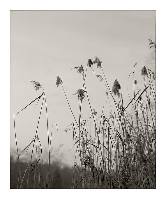 Wintergrass
