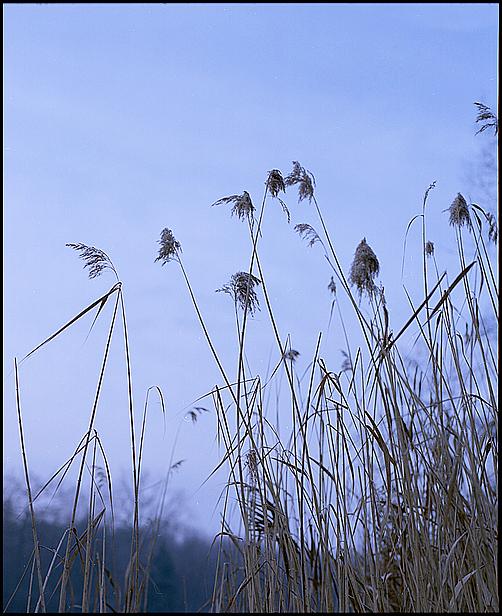 Wintergrass II