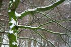 WinterGrün