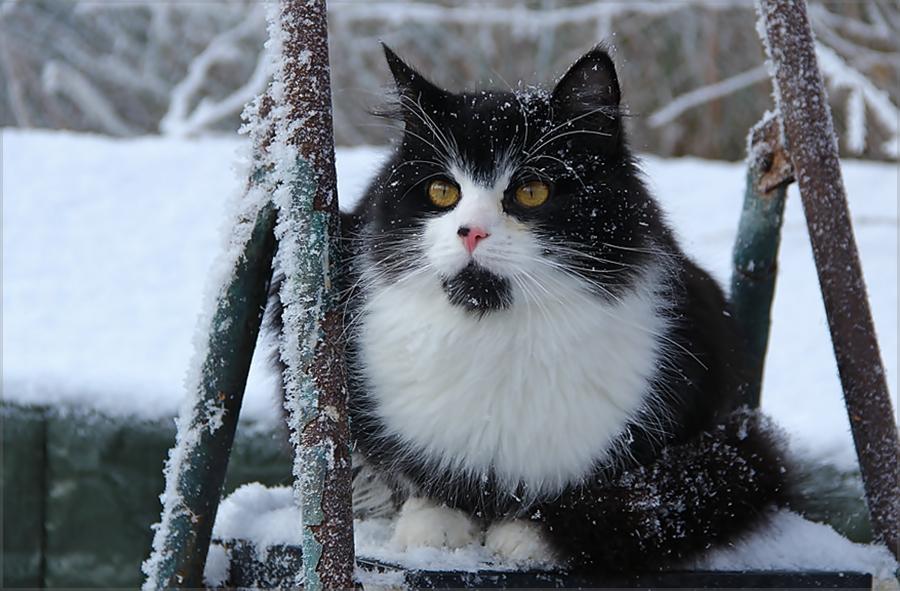 Wintergrüße ...