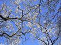 Winterhimmel von Thom Arnold
