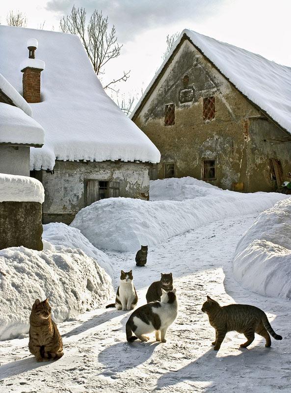 Winteridyll (2)