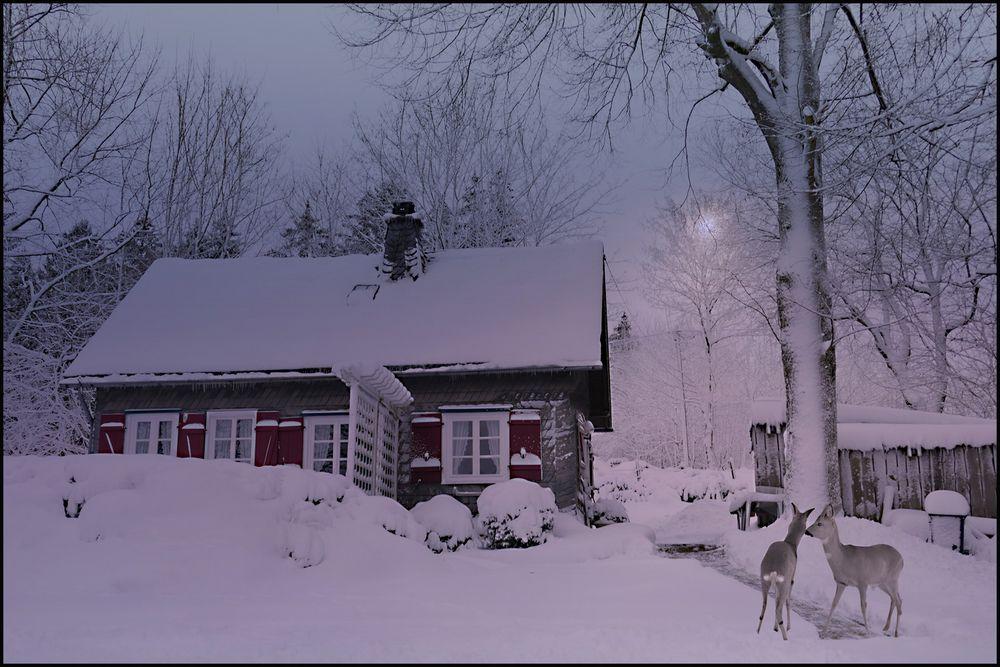 WinterIdyll...