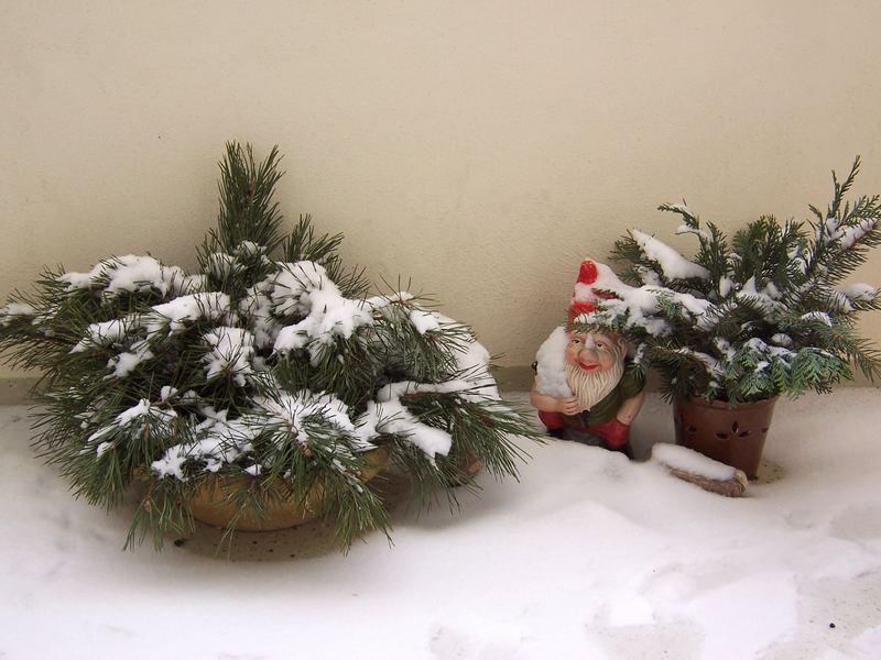 Winteridylle auf dem Balkon - ja ja, Gartenzwerg, bald stehst du wieder da wo du hingehörst)