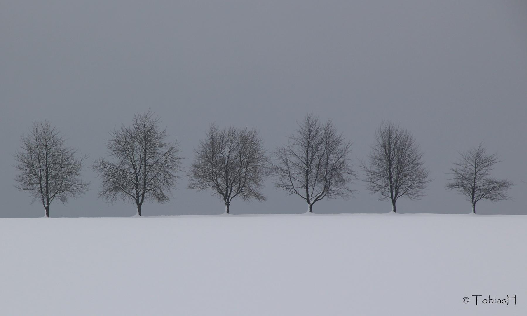 Winterimpression aus dem Schwarzwald
