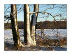 Winterimpression aus dem Teutoburgerwald