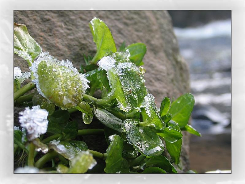 Winterimpression..