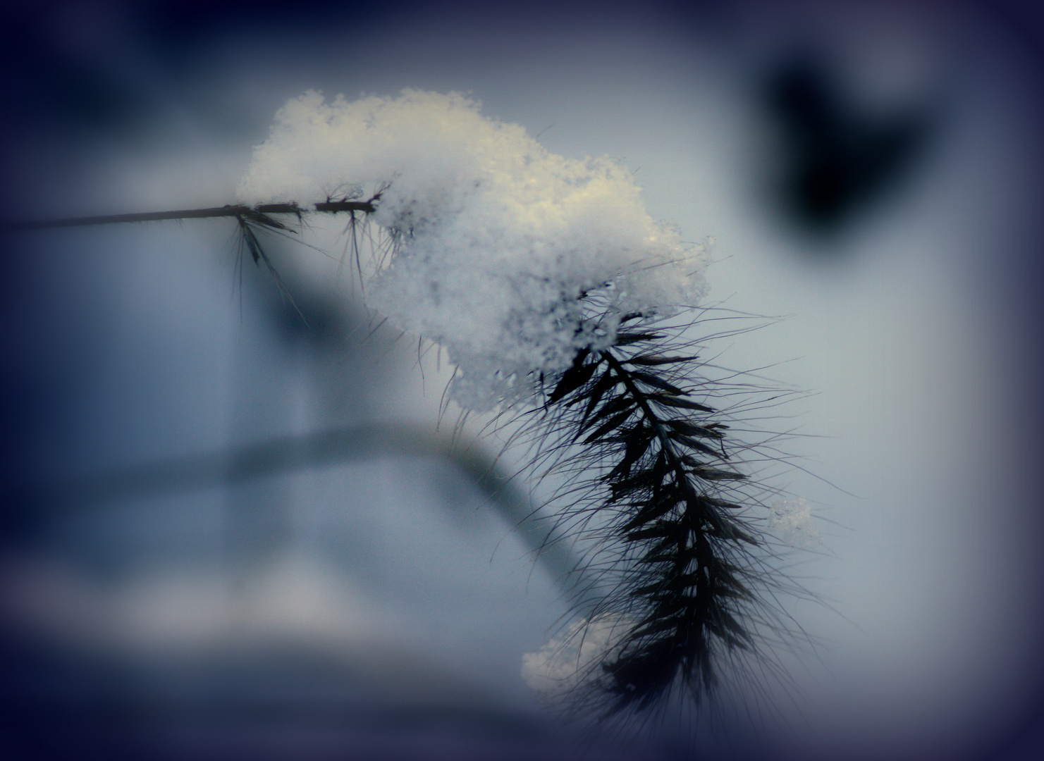 Winterimpression II