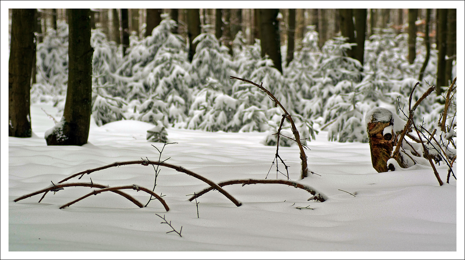 Winterimpression im Vogelsberger Wald