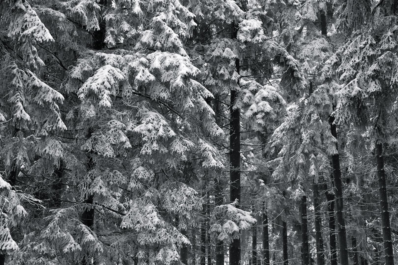 Winterimpression_02