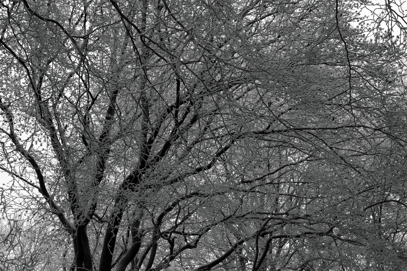 Winterimpression_04