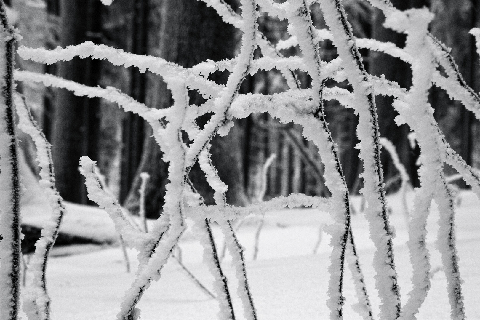 Winterimpression_06