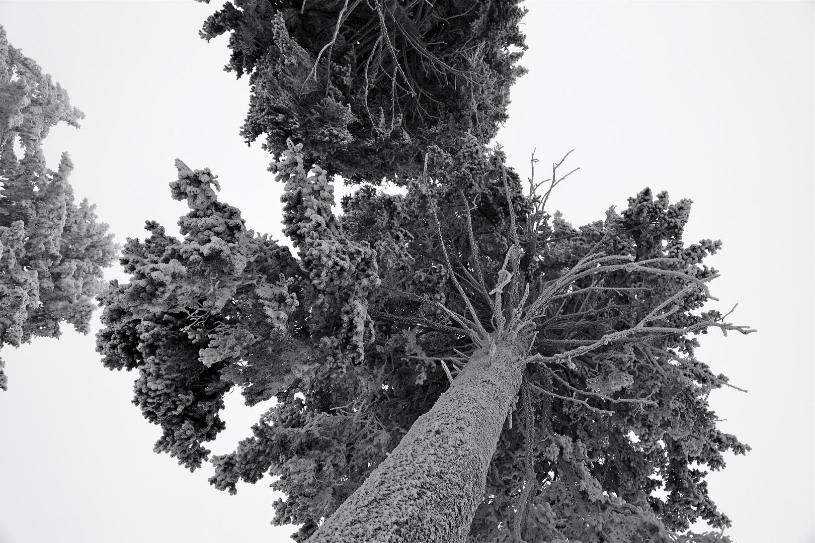 Winterimpression_08