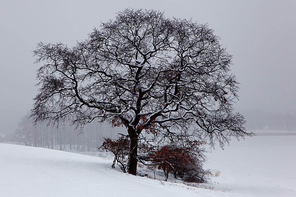 Winterimpressionen (10)