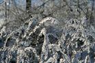 Winterimpressionen 5
