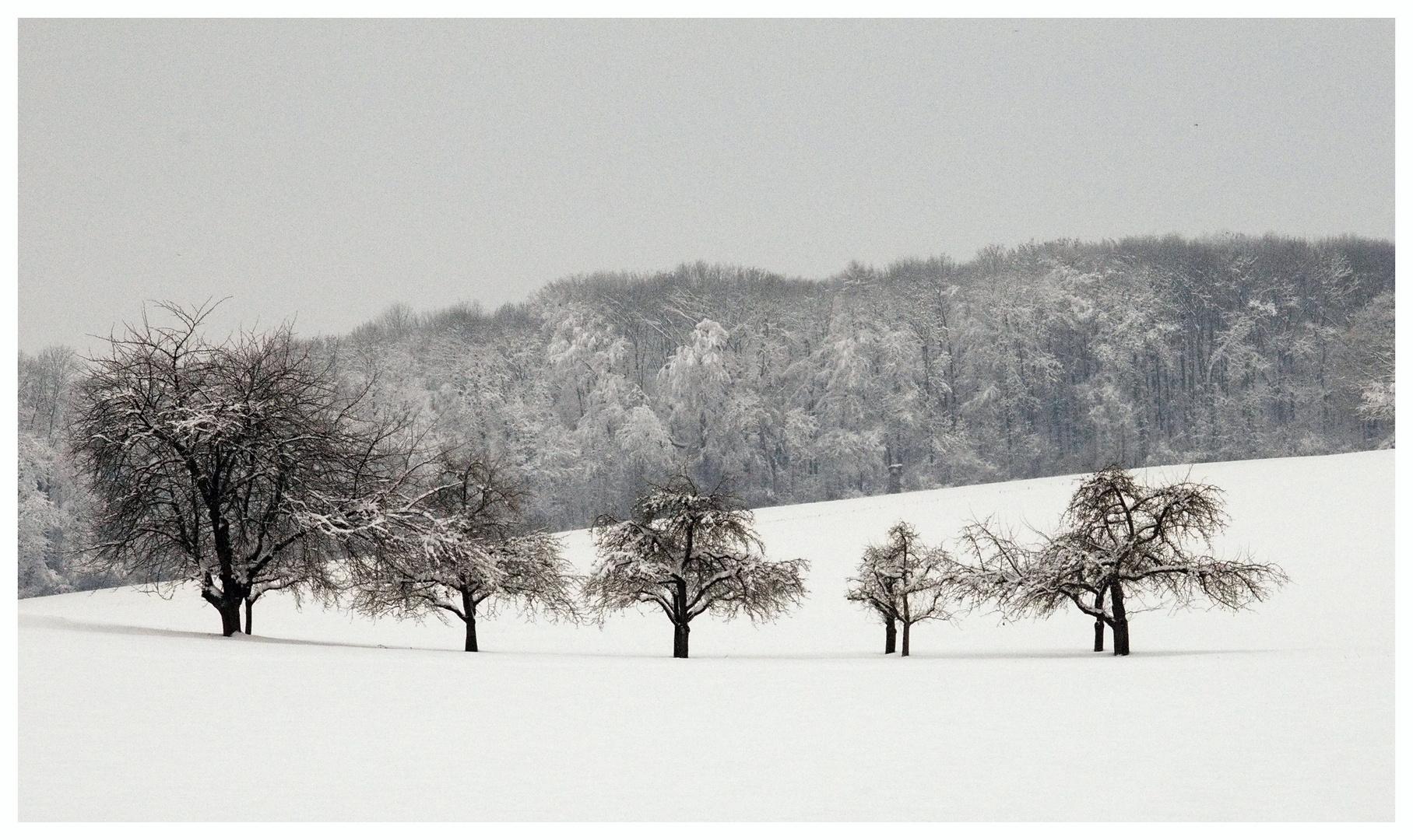 Winterimpressionen III
