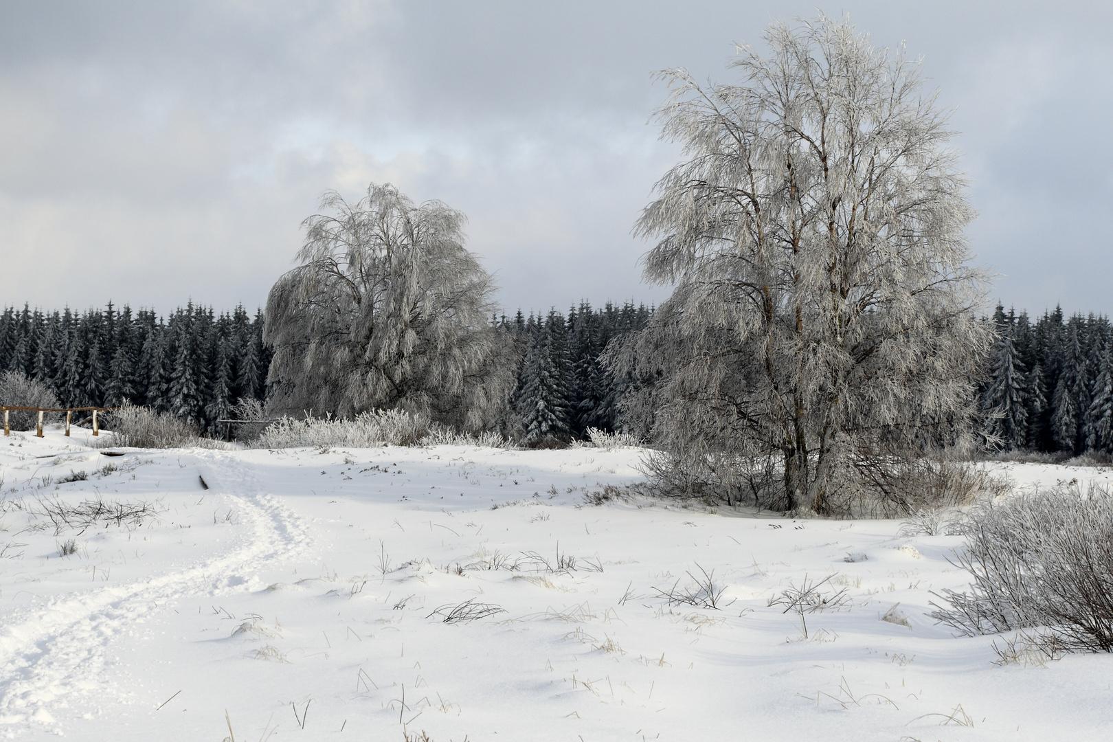 Winterimpressionen im hohem Venn