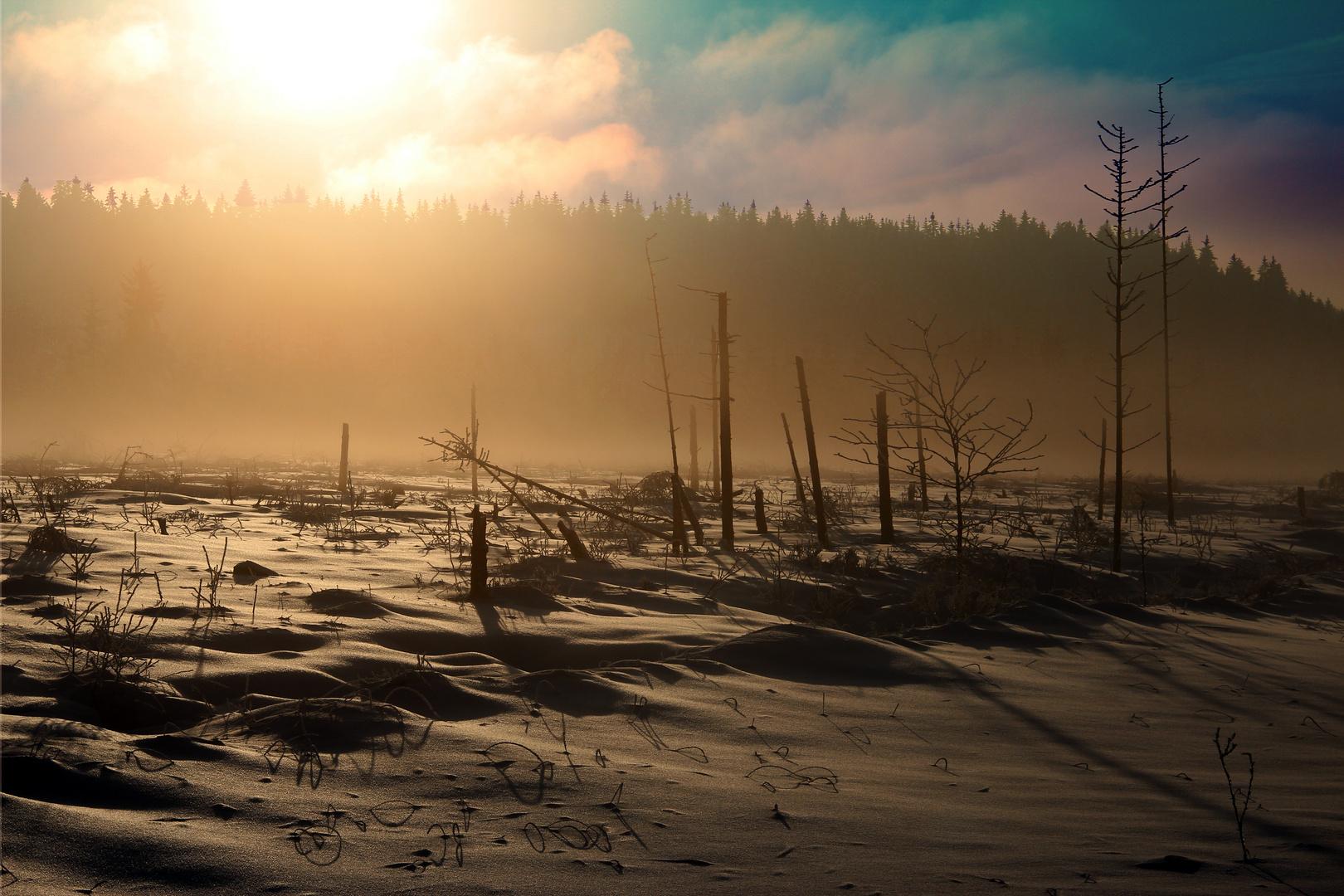 Winterimpressionen im Hohen Venn Dezember 2012