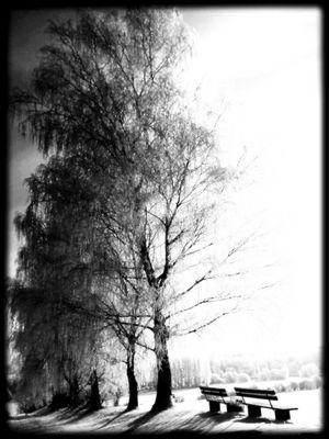 Winterimpressionen in Schwarzweiss