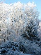 Winterimpressionen - pur & ehrlich
