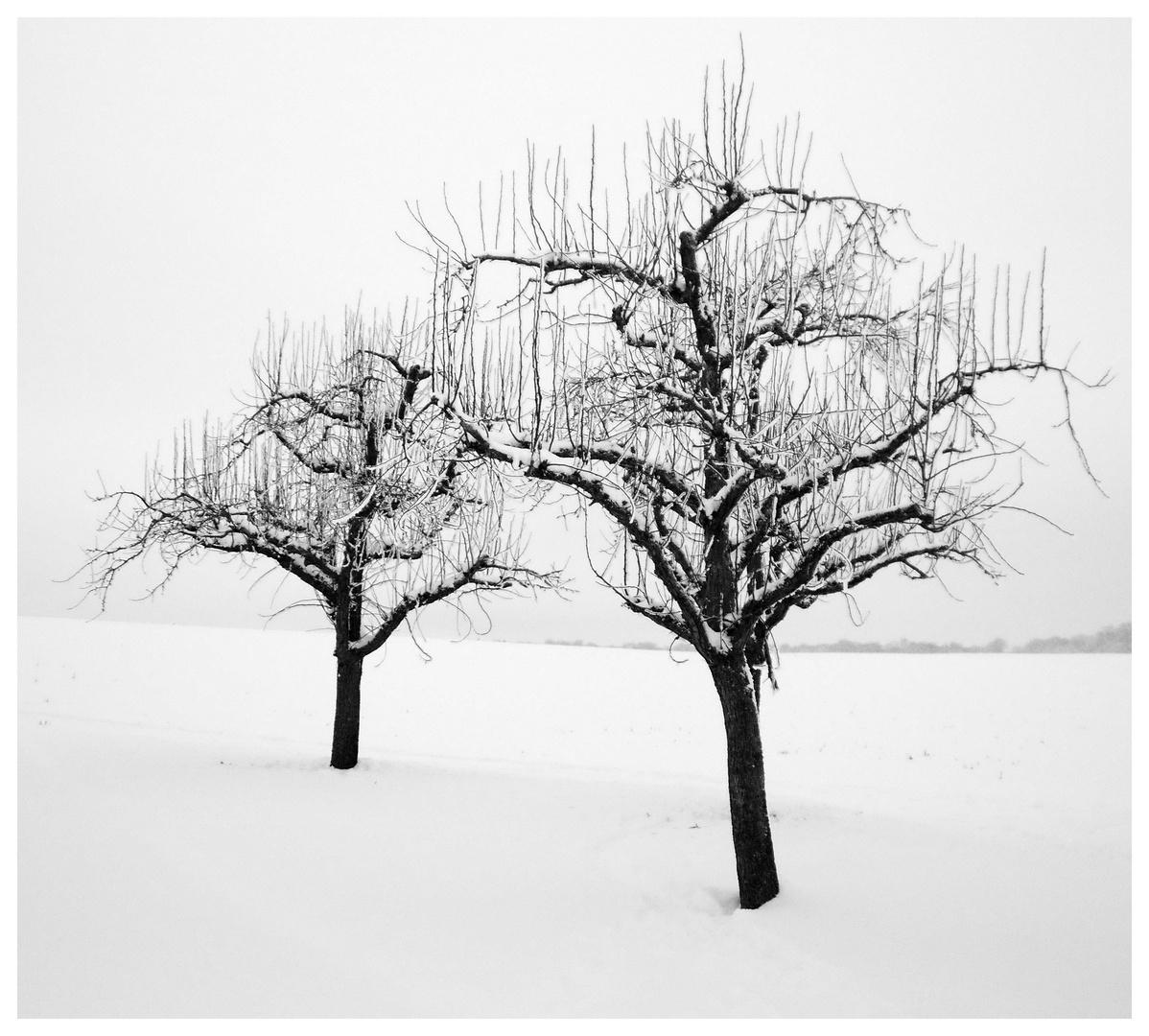 Winterimpressionen V