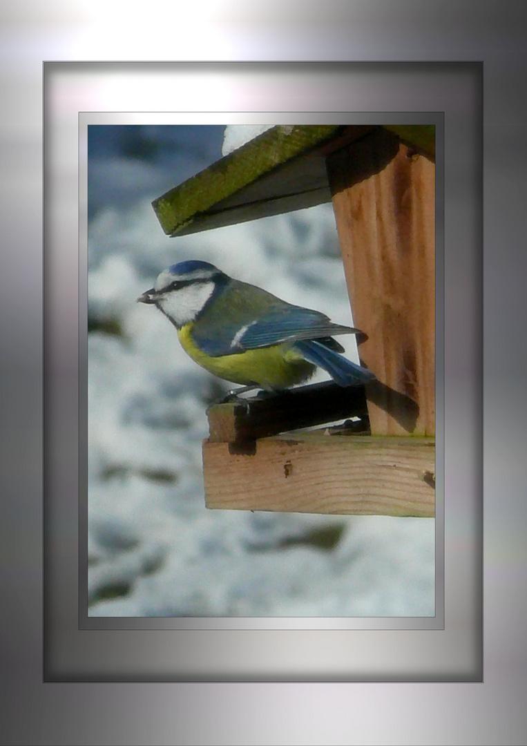 winterimpressionen vor dem küchenfenster