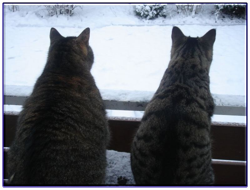 Winterimpressionen zweier Katzen :-)