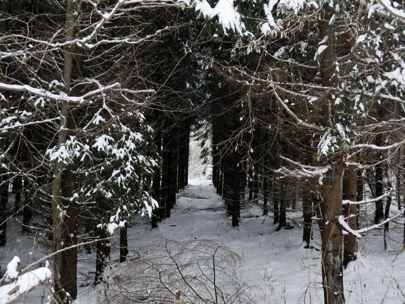 Winterkorridor