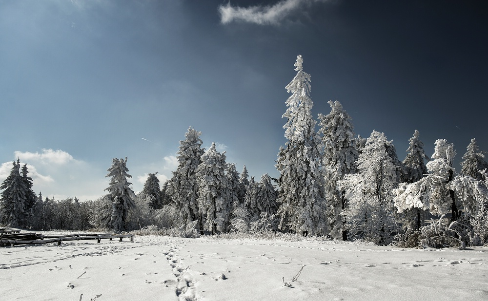 Winterland 1